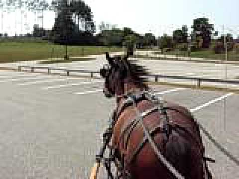 Carriage horse driving at school