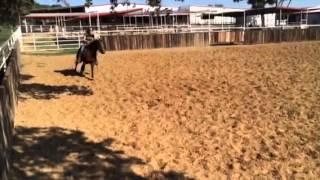 Electra- Jared Lesh cowhorses