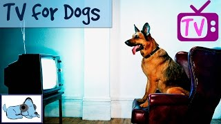 TV for Dogs, Relaxing Dog TV, Film for Dogs, Nature videos for Dogs, Entertainment for Dogs