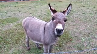 Funny Donkey video - Donkey Hee Haw time