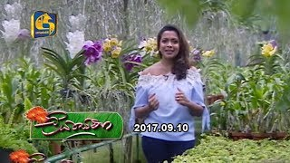 Liya Sewana - 10th September 2017