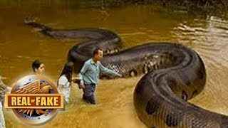 FAMILY FINDS BIGGEST SNAKE EVER RECORDED  - real or fake?