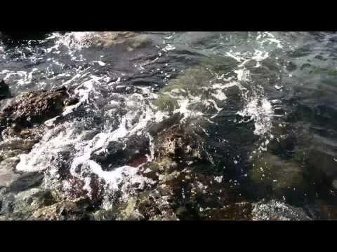 Sea turtles in Maui-Makena Landing