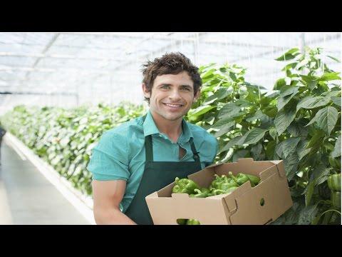 Curso Cultivo de Pepino em Estufa - Produ��o de Mudas