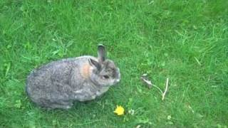 British Rabbit Nature Documentary