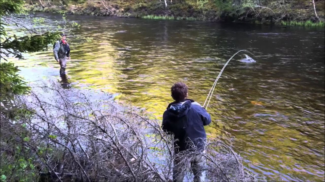 Frontside salmon insane fly fishing evening in sweden for Swedish fish in sweden