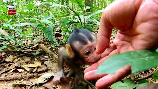 Bree baby lovely monkey is bored come to play with me Youlike Monkey