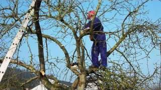 La poda del Manzano y el Plan Renove en los frutales