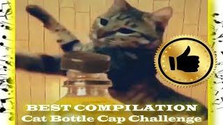 BEST COMPILATION: Cat Bottle Cap Challenge
