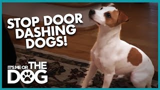 How to Stop Dogs From Door Dashing | It's Me or the Dog