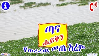 Ethiopia: ጣና ሐይቅን የወረረዉ መጤ አረም - Tana Lake what happend? - DW