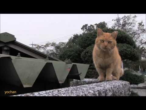 пацанский кот без хвоста на районе Юмор! Прикол! Смех