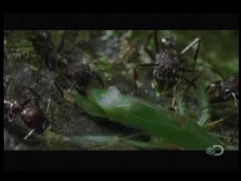 Planet Earth Extremes - Predator To Prey - Part 2