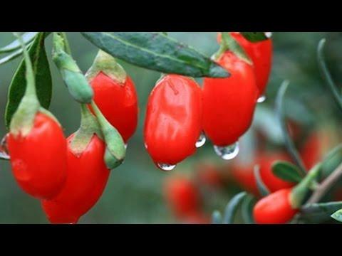 ак приготовить  ¤годы годжи. | How to cook goji berries.
