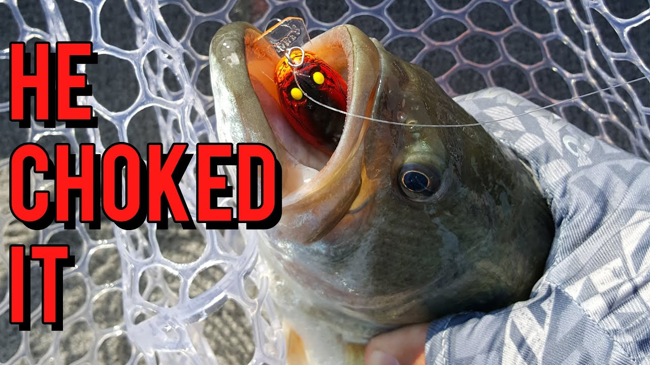 How To Fish Shallow Water Crankbaits