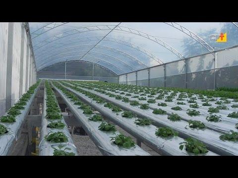 Clique e veja o vídeo Curso a Distância Hidroponia de Plantas Medicinais e Condimentares CPT