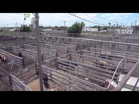 Amarillo Livestock Auction