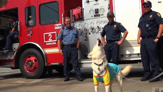 Watch: Service dog imitates fire sirens for his heroes!