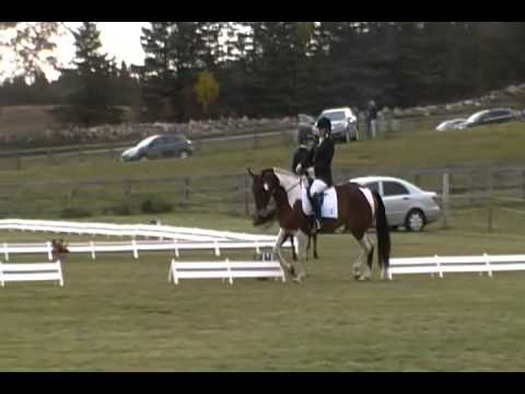 Pied Piper at WIll O' Wind event, dressage phase, Oct 2012
