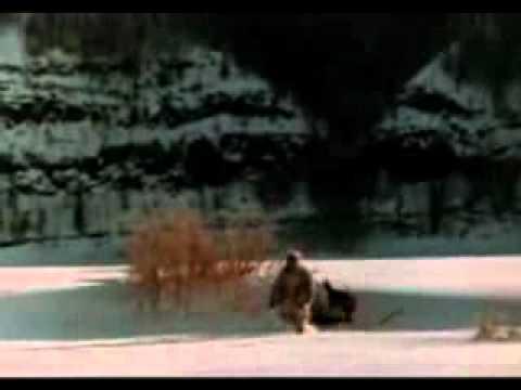 Друг Тыманчи. 1970. Охотник эвенк отпускает волка на волю