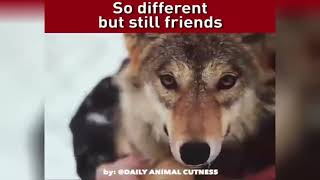 Animals Vs Humans