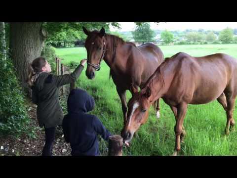Neighbours Horses