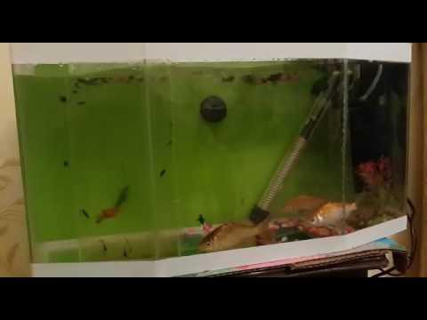 My aqua 6