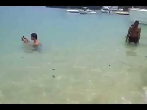 Tortugas Carey acabadas de salir del cascaron en la playa d