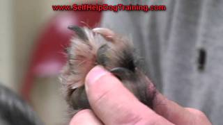 How to Clip Dog Nails - Tips from the Dog Training Guys (k9-1.com)