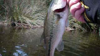 Bass Fishing at Pinto Lake