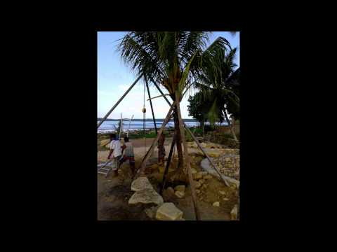 Removing and Replanting Coconut Trees