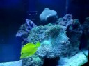 My 72 Gallon Reef Fish Tank, Quick View!