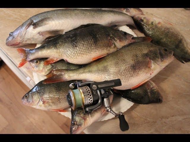 калининградский залив рыбалка на судака