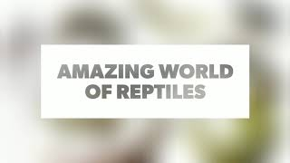 The Knowledge Channel_Episode1_What Are Reptiles