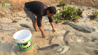 Amazing Man Catch A Lot Of Fish In Pond - Cambodia Traditional Fishing By WCF