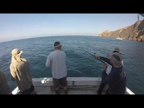 Catalina Island Yellowtail Fishing