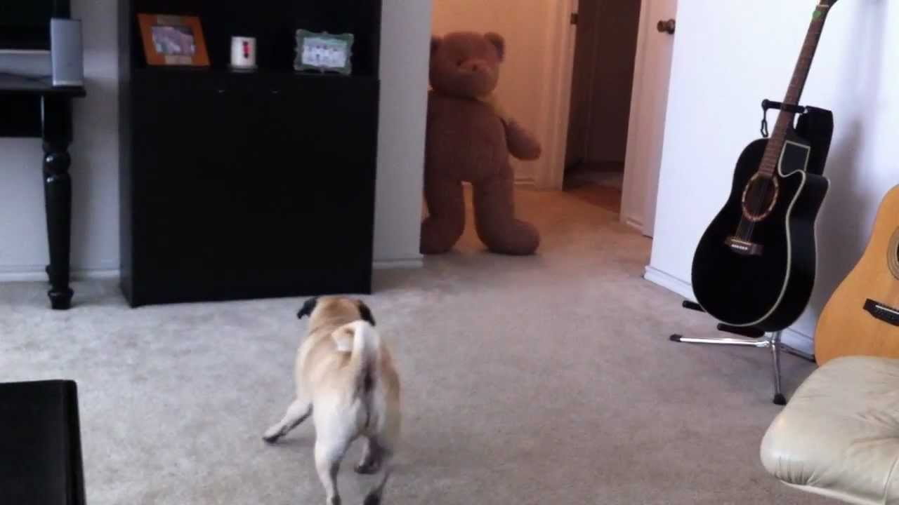 Never scare your dog with a teddy bear