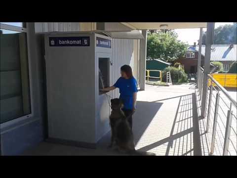 Fokus pies przewodnik komenda bankomat - Fokus guide dog command ATM