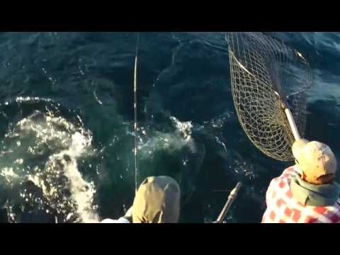 Sheboygan Wisconsin Great Lakes Fishing Reports October 2010