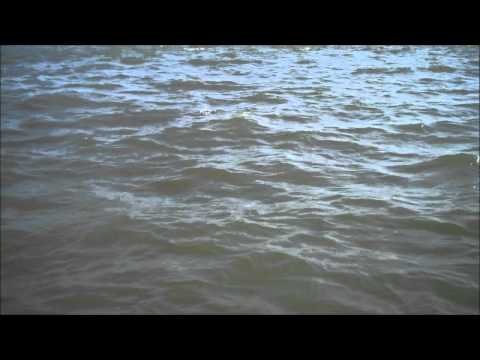Tarpon Fishing Myrtle Beach South Carolina , Barrier Island Guide Service