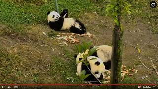Explore org snack time HVG Panda Toddlers get treats