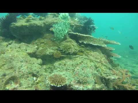 Isaw Extreme Photo Bursts of Scuba Dive at Sapi Island, Sabah Malaysia - Part 2.