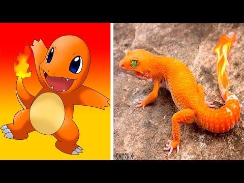 10 Pokémon Reales (POKÉMON GO)