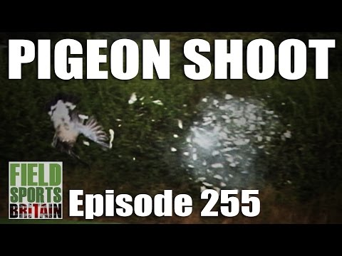 Fieldsports Britain - Pigeon Shoot