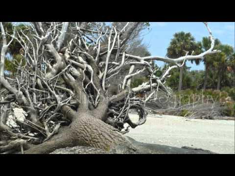 Botany Bay Edisto