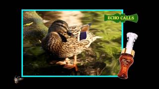 Echo Calls - Echo Timber Cocobolo/Poly Duck Call (single reed)