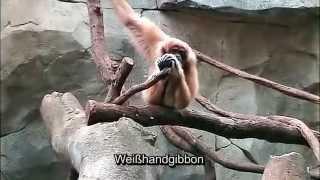 Auf grosser Tour durch den Koelner Zoo 3