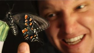 Butterfly Farming IS AMAZING - (Full Life Cycle) - Smarter Every Day 96