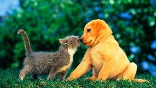 Puppies and Kittens Best Friends Compilation