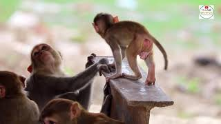 Monkeys Funny Lifestyle | Animalia Family video | Pets and Animals Videos